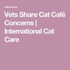 Vets Share Cat Café Concerns | International Cat Care