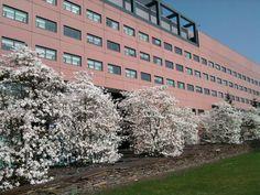 Interpolistuin in Tilburg: Voor even de mooiste plek van de stad