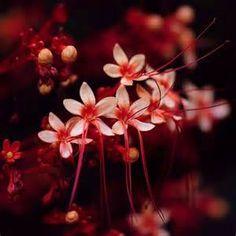 ดอกไม้ - Yahoo Image Search Results