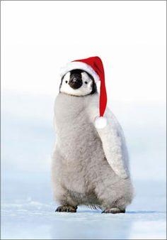 |株式会社ピンナップ|季節のカード|クリスマス|