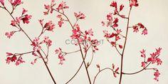 Purpurglckchen by Priska Wettstein Coral Bells, Planting Flowers, Poster, Wreaths, Amazing, Nature, Plants, Home Decor, Pictures