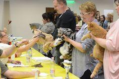Szuszi Cat Kennel: Kiállítás Cat Kennel, Wrestling, Lucha Libre, Cat Houses