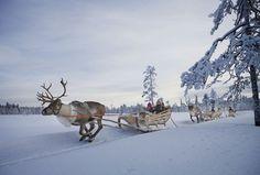 reindeer pulling sleigh - Google Search