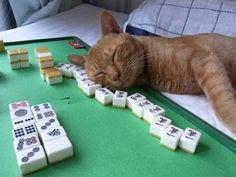 Hard day at the mah jongg table.