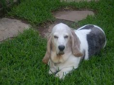 Baxter's brother Winston who is at Rainbow Bridge. Oct 15, 2011