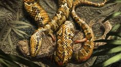 Four-legged snake ancestor 'dug burrows' - BBC News |via'tko BBC News | Take that, Creationists!!