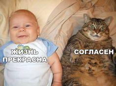 Юмор и котики