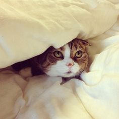 EXCLUSIVE: Kitty's Secret Hideout Revealed