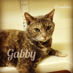 #cat #catsitting #mysisterscat  #gabby
