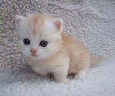 Cuteness Overload! What a gawwgeous kitten #cats #kittens