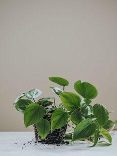 Go Green, Plant Leaves, November, Plants, Terracotta, Mexico, Nature, Plant, Planting