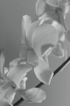 AM Audet Photography | My Hobby Photos