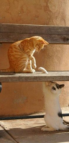 ~feline fun and games~. Who needs toys or catnip?  These cats are truly enjoying themselves.