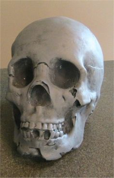How to make skull molds. For Halloween Decor or my Steampunk home.