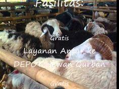 Juragan Domba dan Sapi, Jual Hewan Qurban dan Aqiqah di Bandung, 085 795 232 161