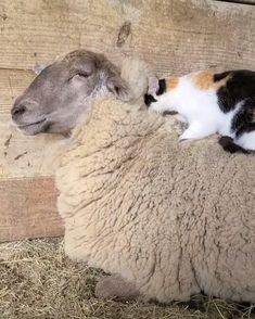 Cute Little Animals, Cute Funny Animals, Cute Cats, Funny Cats, Cute Animal Videos, Funny Animal Pictures, Photo Chat, Cute Creatures, Crazy Cats