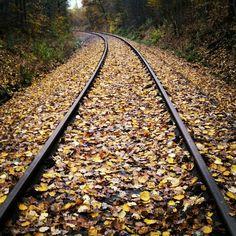 Railroad Tracks, Nature