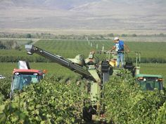2013 Will Be a Record Harvest for Washington Wine | The Wahluke Slope in Washington state is one of the Columbia Valley's key grape-growing areas.