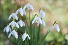 Simply Spring by Jacky Parker, via 500px