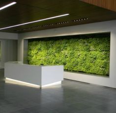 Green walls from Ambius, who handles our reception area