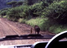 Timon and Pumba - irl