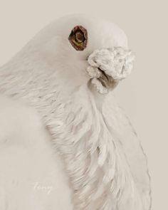 Le Pigeon, Pigeon Loft, Pigeon Pictures, Pigeon Breeds, Palomar, Racing Pigeons, Cute Birds, Tattoo Studio, Beautiful Birds