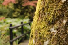 Moss on a tree in Johnston Gardens, Aberdeen, Scotland. Aberdeen Scotland, My Best Friend, I Am Awesome, Gardens, Flowers, Plants, Dear Best Friend, Garden, Flora