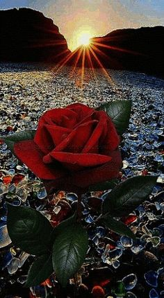 Beautiful Flowers Wallpapers, Beautiful Rose Flowers, Beautiful Nature Wallpaper, Romantic Flowers, Pretty Wallpapers, Love Flowers, Rose Flower Wallpaper, Flowers Gif, Beautiful Love Pictures