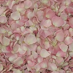 LYDIA PETITE PINK Preserved Freeze Dried Rose Petals $3.30 per cup| 15 cup minimumA Stunning Color rose petal that is ideal for Weddings, especially for your guest toss...this rose petal looks like ch