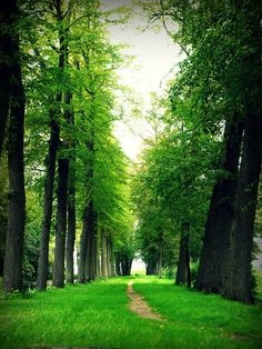 Well, Limburg, Netherlands