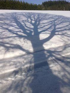 Bläulich spiegelt sich die Aststruktur eines großen Baumes als Schatten auf dem zentimeterdicken Schnee in der Eifel.