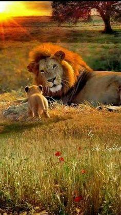 Good morning lion cub!
