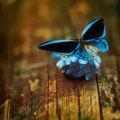 Cute Little Blue Flowers Beautiful Flowers Wallpapers, Beautiful Gif, Beautiful Butterflies, Butterfly Gif, Butterfly Template, Glitter Wallpaper, Flower Wallpaper, Gifs, Gif Bonito