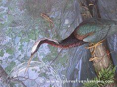 The Wildlife Art of Carel Pieter Brest van Kempen - RIPARIAN RASHOMON --  Agami Heron & Brilliant Forest Frog (2009)
