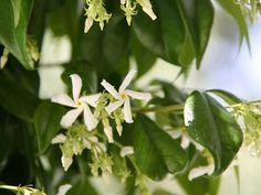 Um jardim para cuidar: Aromas de verão !