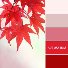 Autumn leaves against pastel background Color Palette #389 – Ave Mateiu - Fall Autumn 2020, color palette, color palettes, colour palettes, color scheme, color inspiration, color combination, art tutorial, collage, digital art, canvas painting, wall art, home painting, photography, weddings by color, inspiration, vintage, wallpaper, background, rustic, seasonal, season, natural, nature