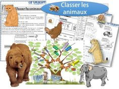 Fiches animaux                                                                                                                                                                                 Plus