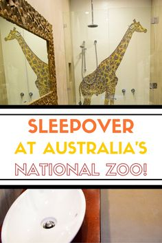 If you've ever dreamed of an intimate experience with African animals, Jamala Wildlife Lodge is the place for you. The ultimate sleepover in Australia's national zoo. We had a Giraffe outside our room!!