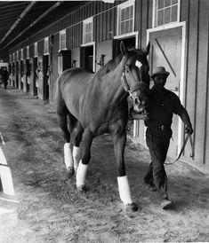 Groom Eddie Sweat leads Kentucky Derby winner Secretariat to the stakes barn to await his run in the Preakness.