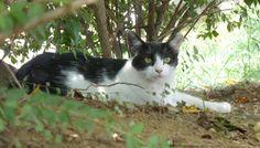 黒白模様の猫(304)猫写真-横浜 #猫写真