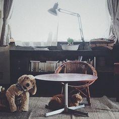 曇り  水曜日  まだ水曜日…    #猫#ねこ#ネコ#ねこのいる暮らし #猫との暮らし #cat #cats #catstagram #ちゃとら #茶とら #古道具