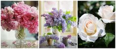 Add peonies, lilac, and garden roses to your floral arrangements—they're popular choices in May!