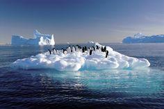 O aumento da temperatura global entre 1,5ºC e 2ºC provocaria a perda de até 85% da calota de gelo na #Antártida, segundo um estudo realizado por cientistas australianos e neozelandeses. Foto: Frederique Olivier/AFP.