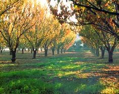 What I would give to have an orchard near my house one day....