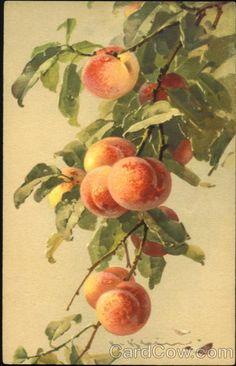 Peaches ~ C. Klein