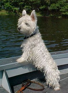 """My buddy, WE TOO, had one just like this that was our boat """"Captain"""", just loved to go fishing with us:)"""