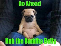 Go ahead rub the Buddha Belly