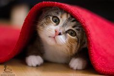 Famous stars walk on the red carpet, I walk under it :3 http://sulia.com/channel/cats/f/58fc9426-89c9-4281-8fc4-789344e87956/?