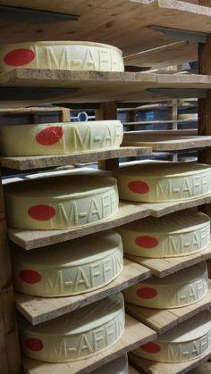 Hier wordt een nieuw kaasmerk geboren... 100% biologisch duurzaam en met rauwe melk direct vanaf de boer. Kunnen niet wachten tot het in de winkel ligt #kaas #cheese #bio #delicious Volg dit merk op Facebook https://www.facebook.com/pages/Meester-Affineurs/244999452346344?ref=hl