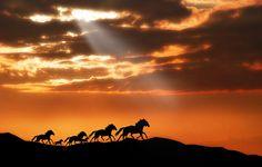 horses in the sun set (run free)